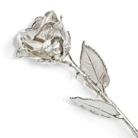 Special Silver Rose